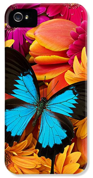Blue Butterfly On Brightly Colored Flowers IPhone 5 Case by Garry Gay