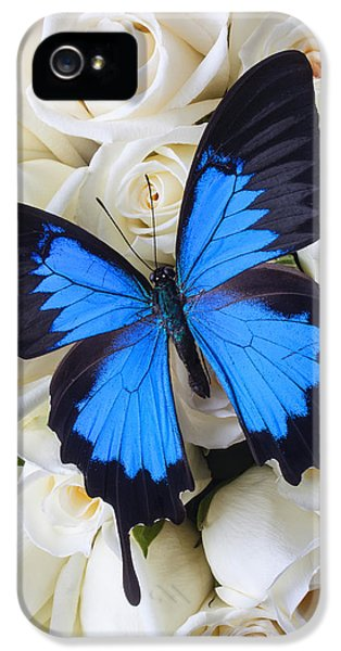 Blue Butterfly On White Roses IPhone 5 Case