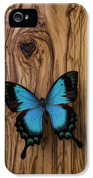 Blue Butterfly On Wood Grain IPhone 5 Case by Garry Gay