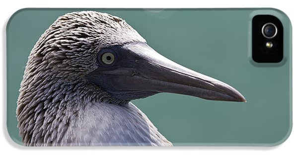 Blue Footed Booby II IPhone 5 Case by Dave Fleetham