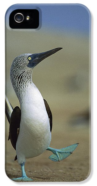 Blue-footed Booby Sula Nebouxii IPhone 5 Case by Tui De Roy