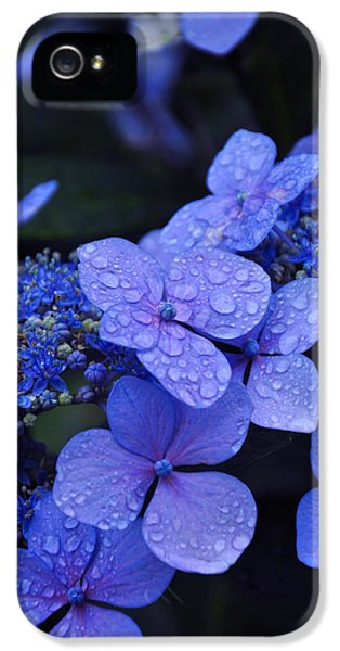 Blue Hydrangea IPhone 5 Case