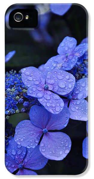 Blue Hydrangea IPhone 5 Case by Noah Cole