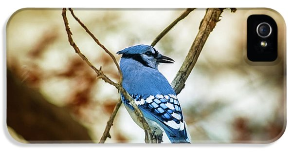 Bluejay iPhone 5 Case - Blue Jay by Robert Frederick