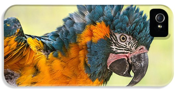 Blue Throated Macaw IPhone 5 Case