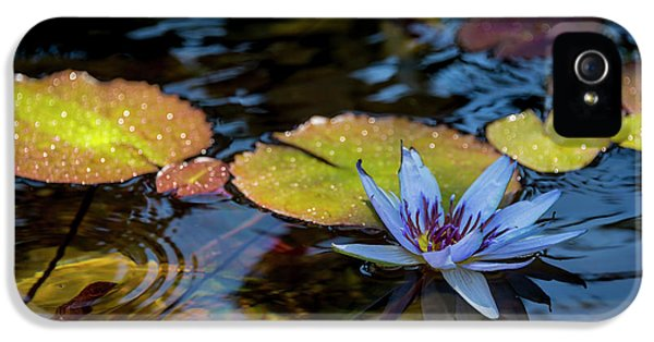 Blue Water Lily Pond IPhone 5 Case by Brian Harig