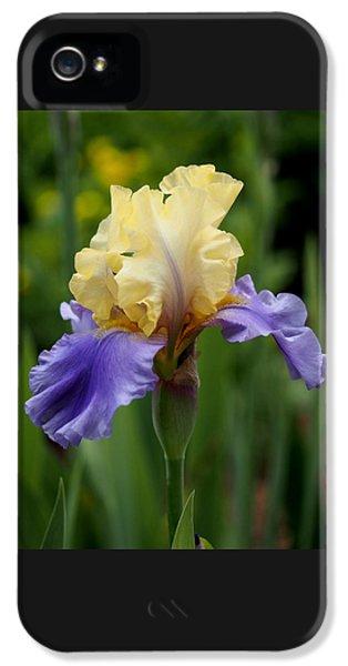 Blue Yellow Iris Germanica IPhone 5 Case by Rona Black