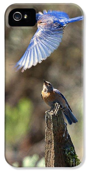 Bluebird Buzz IPhone 5 Case by Mike Dawson