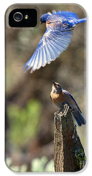 Bluebird Buzz IPhone 5 Case