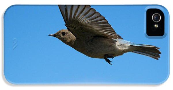 Bluebird Glide IPhone 5 Case by Mike Dawson