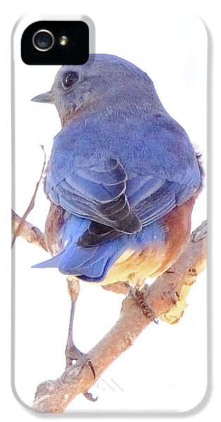 Bluebird On White IPhone 5 Case by Robert Frederick