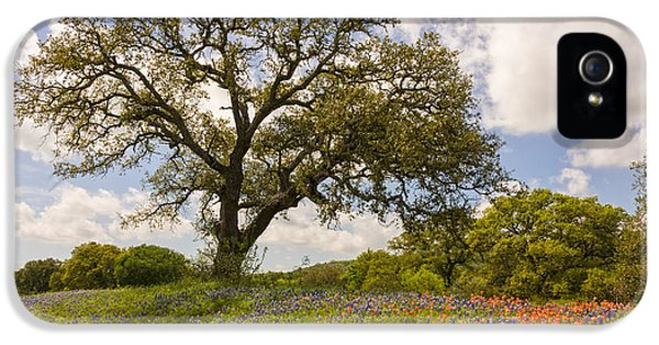 Bluebonnets iPhone 5 Case - Bluebonnets Paintbrush And An Old Oak Tree - Texas Hill Country by Brian Harig
