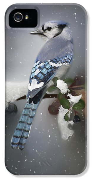 Bluejay iPhone 5 Case - Bluejay In Winter by Lena Auxier