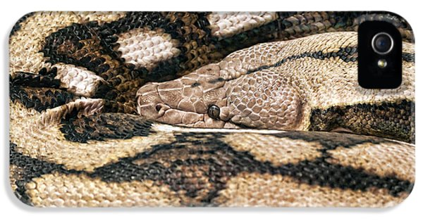 Garden Snake iPhone 5 Case - Boa Constrictor by Tom Mc Nemar