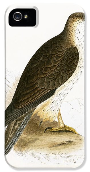 Bonelli's Eagle IPhone 5 Case by English School