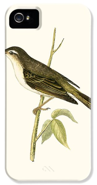 Bonelli's Warbler IPhone 5 Case by English School