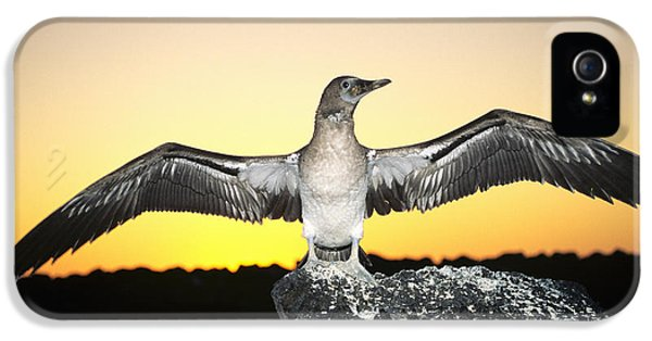 Booby At Sunset IPhone 5 Case by Dave Fleetham - Printscapes