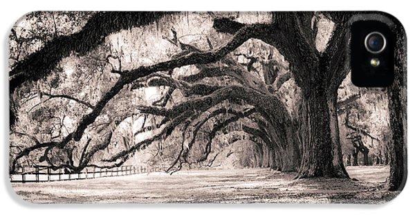 Boone Hall Plantation Live Oaks IPhone 5 Case by Dustin K Ryan