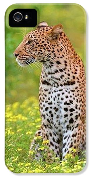 Botswana Leopard  IPhone 5 Case by Happy Home Artistry