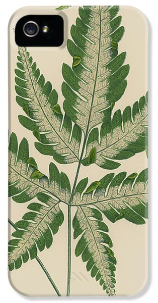 Brake Fern IPhone 5 Case
