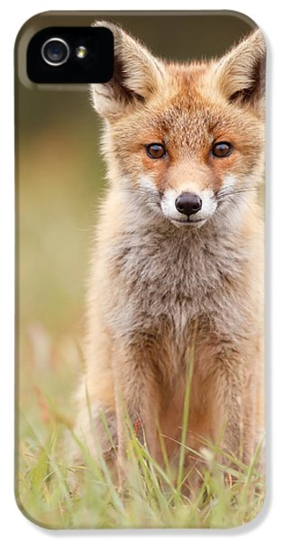 Brave New Fox Kit IPhone 5 Case by Roeselien Raimond