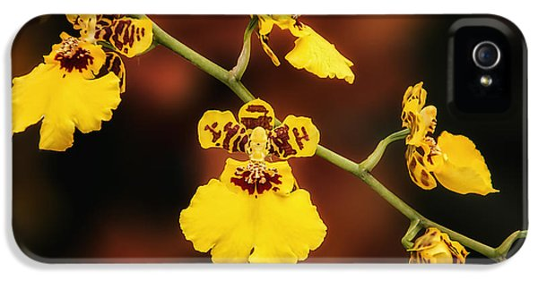 Bright And Beautiful Orchids IPhone 5 Case by Tom Mc Nemar