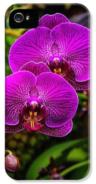 Bright Purple Orchids IPhone 5 / 5s Case by Garry Gay