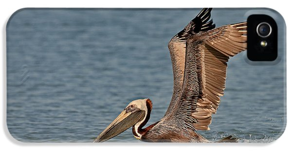 Brown Pelican Take Off IPhone 5 Case by Susan Candelario