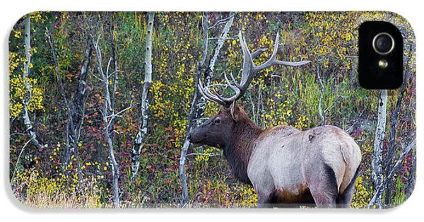 IPhone 5 Case featuring the photograph Bull Elk by Aaron Spong