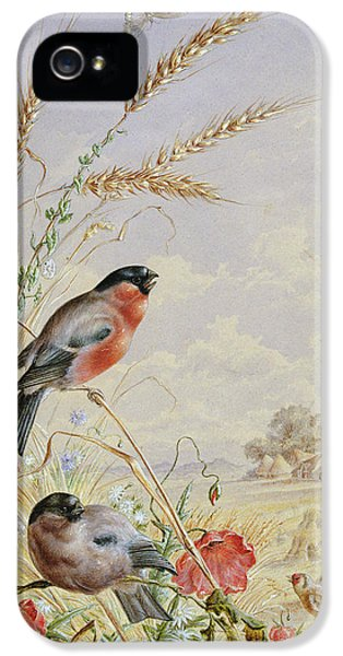 Bullfinches In A Harvest Field IPhone 5 Case by Harry Bright