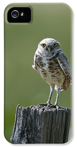 IPhone 5 Case featuring the photograph Burrowing Owl by Gary Lengyel