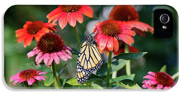 Butterfly On Cone Flowers  IPhone 5 Case by Luana K Perez