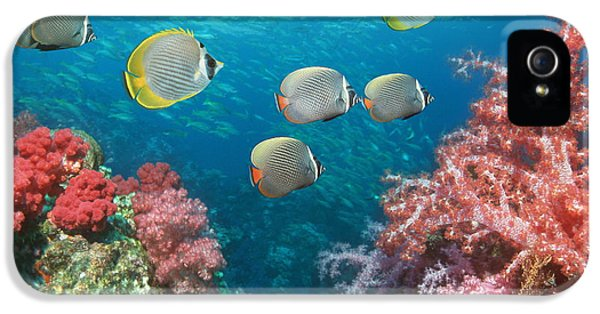 Butterflyfish Over Corals IPhone 5 Case by Georgette Douwma