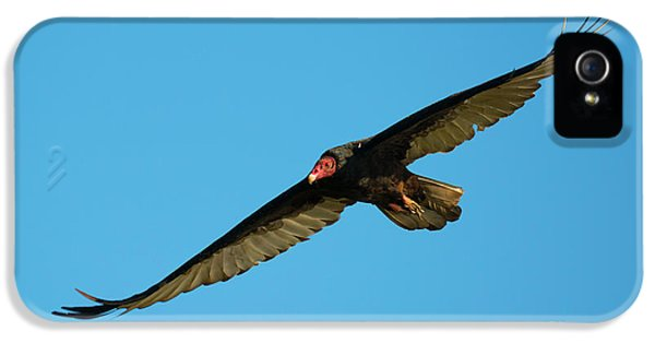 Vulture iPhone 5 Case - Buzzard Circling by Mike Dawson