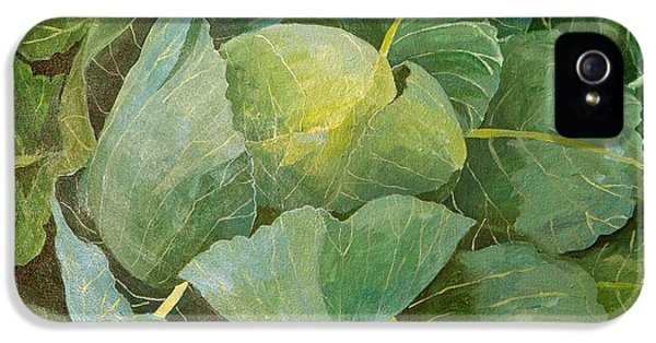 Cabbage IPhone 5 Case by Jennifer Abbot