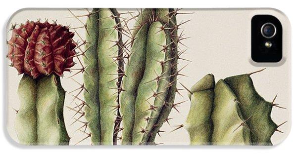 Cacti IPhone 5 Case by Annabel Barrett