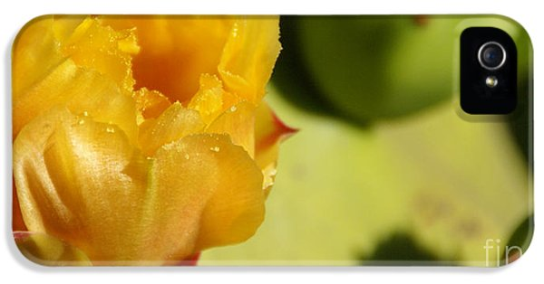 Cactus Flower IPhone 5 Case by Linda Shafer