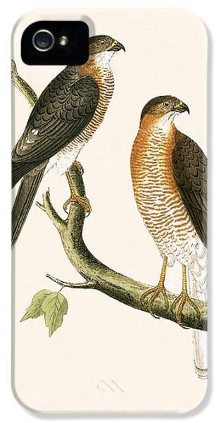 Calcutta Sparrow Hawk IPhone 5 Case