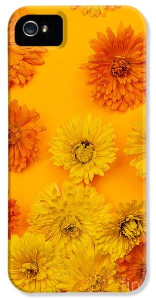 Calendula Flowers On Orange Background IPhone 5 Case
