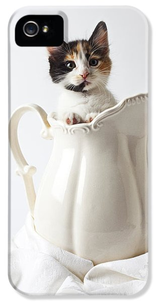 Calico Kitten In White Pitcher IPhone 5 Case by Garry Gay