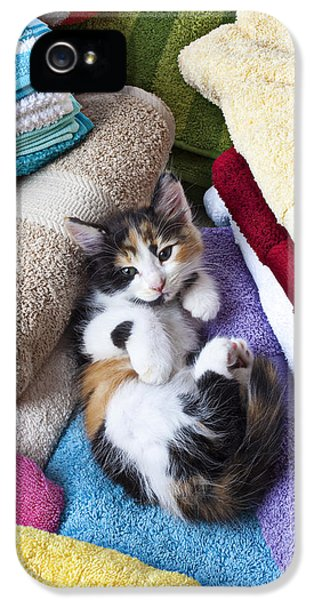 Calico Kitten On Towels IPhone 5 Case by Garry Gay