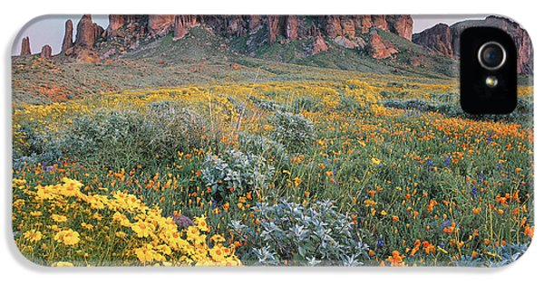 California Brittlebush Lost Dutchman IPhone 5 Case by Tim Fitzharris