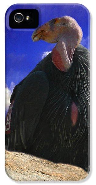 California Condor IPhone 5 Case