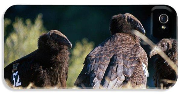 California Condors IPhone 5 Case