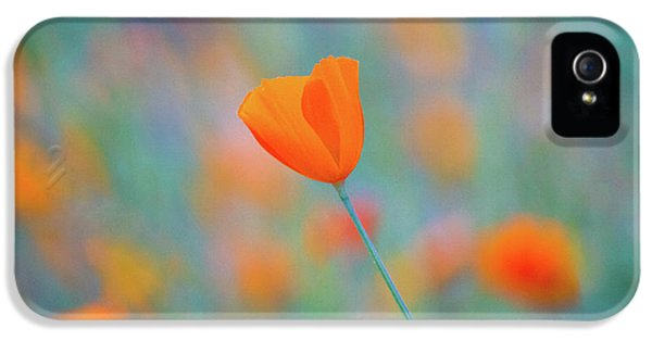 Spring Poppy IPhone 5 Case by Anthony Bonafede