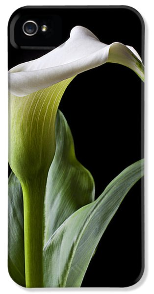 Lily iPhone 5 Case - Calla Lily With Drip by Garry Gay