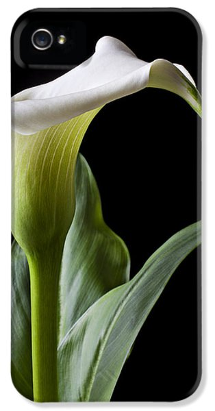 Calla Lily With Drip IPhone 5 Case by Garry Gay