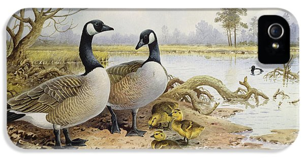 Canada Geese IPhone 5 Case by Carl Donner
