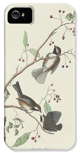 Canadian Titmouse IPhone 5 Case by Rob Dreyer