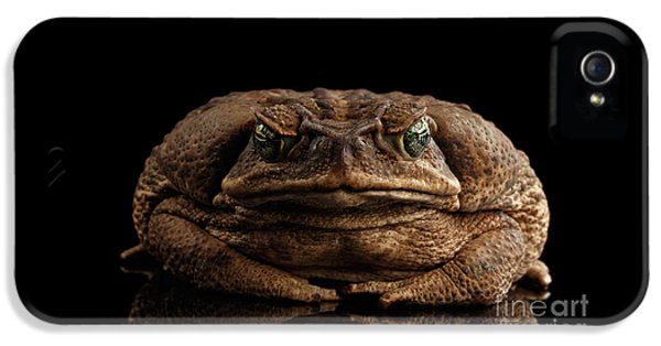 Cane Toad - Bufo Marinus, Giant Neotropical Or Marine Toad Isolated On Black Background, Front View IPhone 5 Case